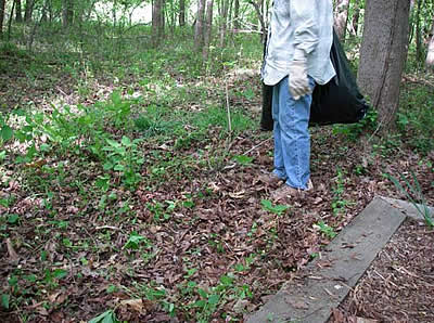 Volunteer admiring area cleared of garlic mustard
